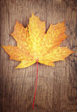 Autumn color leaf on wooden background Royalty Free Stock Photos