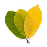 Autumn color leaves Royalty Free Stock Images