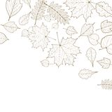 Autumn color leaves background template. Stock Photography