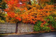 Autumn color leaves and bamboo fence Stock Photo