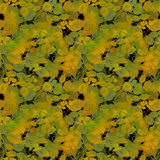 Autumn Color Leaves on Black Backgr Royalty Free Stock Image