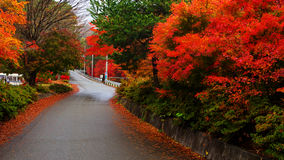Autumn color leaves with curve street Royalty Free Stock Images