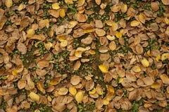 Autumn Color Leaves en la tierra Fotografía de archivo libre de regalías