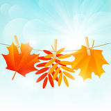 Autumn color leaves on rope on sunny background Stock Photos