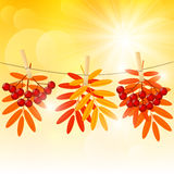 Autumn color leaves on sunny background Stock Photos
