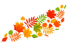 Autumn color leaves on white background Royalty Free Stock Images