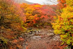 Autumn color in Naejangsan national park, South korea stock photos