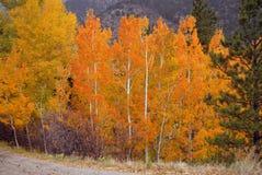 Autumn Color nas Montanhas Rochosas Imagens de Stock