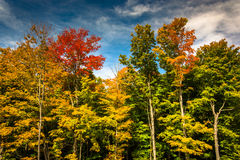 Autumn color near Bethel, Maine. Royalty Free Stock Image