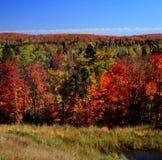 Autumn Color Palette - överlägsen nationalskog Arkivbilder