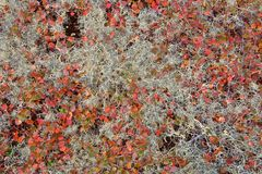 Autumn color palette in tundr. A - Yakutia, Siberia royalty free stock images
