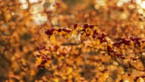 Autumn color in the park. Beautifu color at the autumn in the park Royalty Free Stock Image