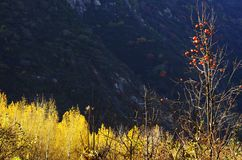 Autumn color of Qinling royalty free stock photos
