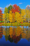 Autumn color Reflecting Royalty Free Stock Photography
