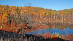 Autumn Color Reflection Adirondacks, New York Royaltyfri Fotografi