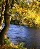 Autumn color in the river Stock Photography