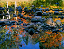Autumn Color in River Reflection Stock Image