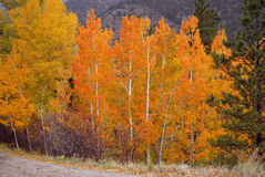 Autumn Color in the Rockies Stock Images