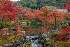 Autumn color season in Eikando temple. Stock Photo
