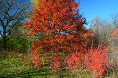 Autumn Color Splashes At Sunfish See-Park Stockfotografie