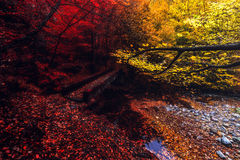 Autumn color. Stara reka river in Bulgaria Royalty Free Stock Photo