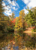 Autumn color surrounds mirror lake in fall. In Dupont forest NC Stock Photos