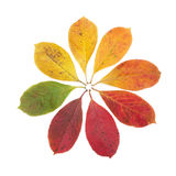 Autumn Color Symbol. Bush leaves showing all of autumn colors in a circle Stock Photos
