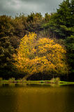Autumn Color Royalty Free Stock Image