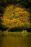 Autumn Color Stock Photography