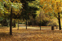 Autumn/ Color Trees in a beautiful park Royalty Free Stock Image