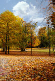 Autumn/ Color Trees in a beautiful park Royalty Free Stock Photography