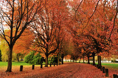 Autumn color in trout lake park Royalty Free Stock Photos