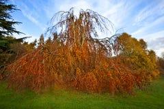 Autumn color on woodland trees Stock Photo