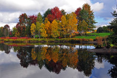 Autumn colora Reflecting royalty free stock images
