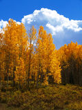 Autumn in Colorado. Colorado colorful trees in autumn Stock Photo