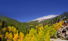 Autumn  in Colorado Royalty Free Stock Photo
