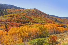 Autumn in Colorado Stock Images