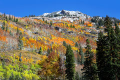 Autumn in Colorado Royalty Free Stock Photos