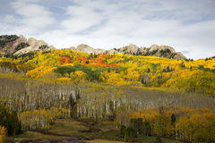 Autumn in Colorado. Autumn colors on Kebler Pass near Crested Butte, Colorado Royalty Free Stock Photos