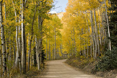 Autumn Colorado Dirt Road. Beautiful golden Aspens alongside rural unpaved Colorado road with beautiful cloudy blue skies royalty free stock photography