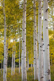 Autumn in Colorado. Fall in Colorado Mountains near Aspen Stock Photography