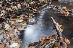 Stream in autumn Stock Image