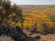 Autumn colored aspen trees in desert. Autumn colored aspen trees fill a lush valley in the middle of the high desert of the Steens Mountains in Oregon royalty free stock photo