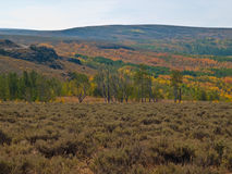 Autumn colored aspen trees in desert. Autumn colored aspen trees fill a lush valley in the middle of the high desert of the Steens Mountains in Oregon Royalty Free Stock Photos