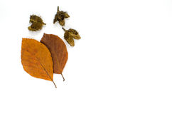 Autumn colored beech leaves Royalty Free Stock Photography