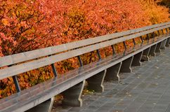 Autumn colored bushes with bright leaves and wooden bench royalty free stock images