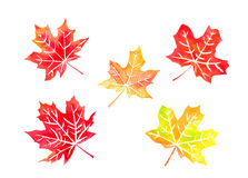 Autumn colored canadian maple leaves. Set watercolor Royalty Free Stock Images