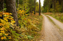 Autumn colored country road Royalty Free Stock Photo