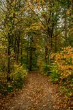 Autumn colored forest with path royalty free stock photo