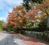Japanese autumn garden in Tenryuji temple during autumn season i. Autumn colored garden in Tenryuji temple during autumn season in Arashiyama, Kyoto, Japan Royalty Free Stock Images